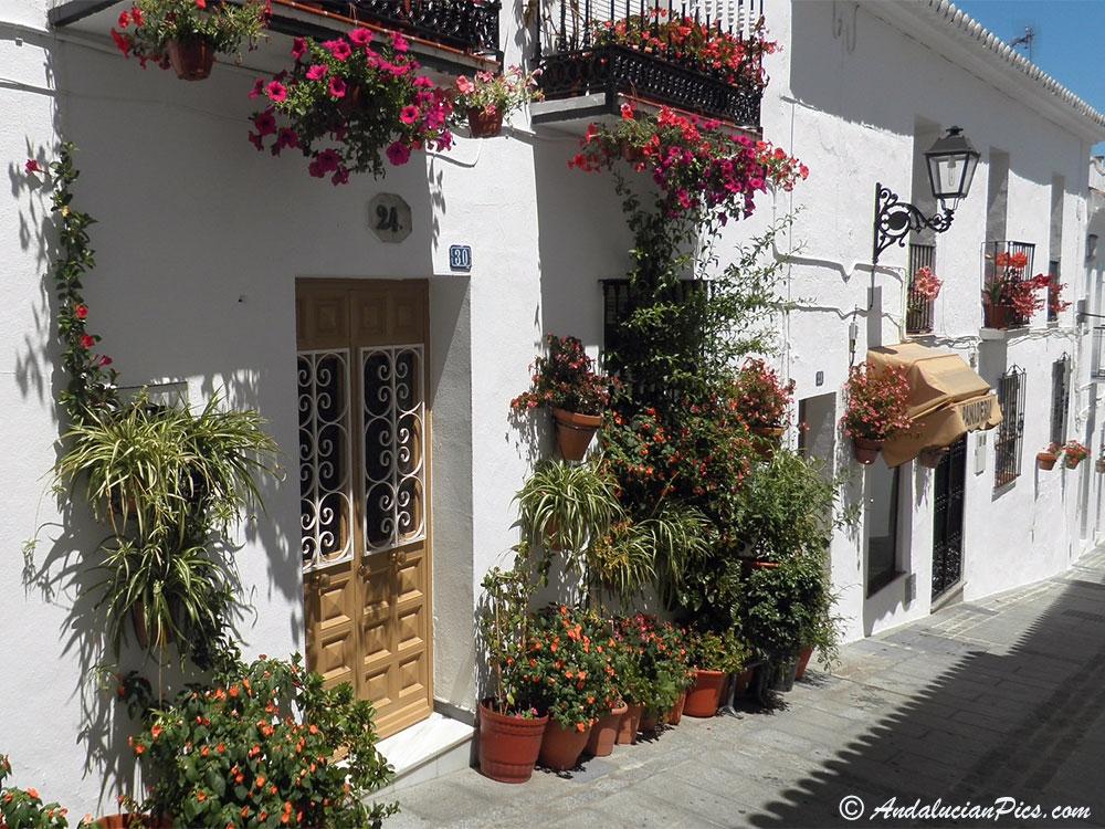 Mijas village fleuri