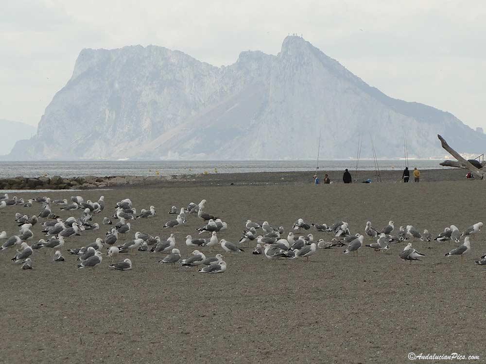 Sotogrande beach and seagull