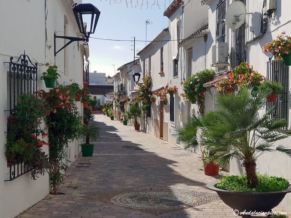 Estepona Old Town flowers